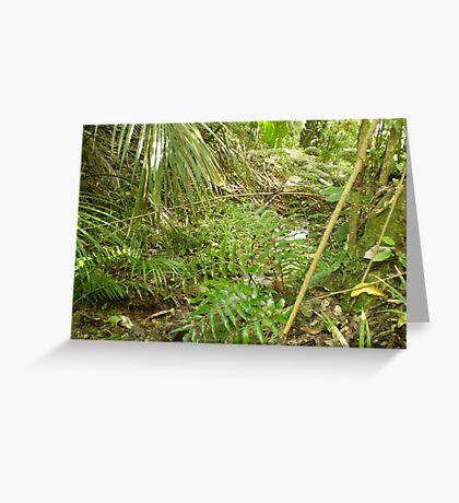 Nikau Reserve Greeting Card