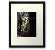 Driving Among The Giants Framed Print