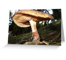 Fungi!! Greeting Card