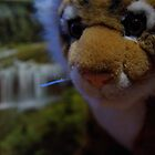 """Soxy shoots in """"The Wild""""... by Soxy Fleming"""