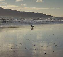 Paraparaumu Beach by elizabethrose05