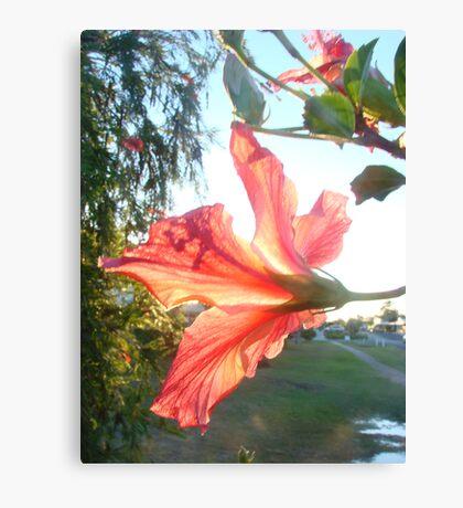 Red Hibicus's-Inner Glow Canvas Print