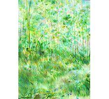 Nature's Curtain Photographic Print
