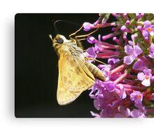 nectar Canvas Print