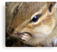 Chipmunk Up Close... Canvas Print