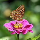 A Butterfly by BigD