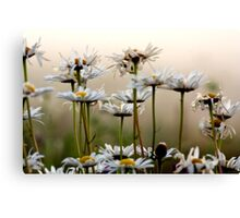 Daisies In The Fog Canvas Print