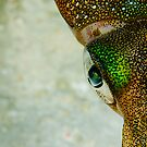 colour squid style by LeanderWiseman