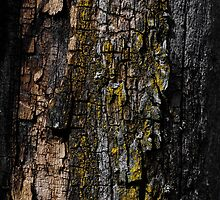 Mossy wood bark by PLdesign
