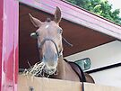 Horse in a horse box by LoneAngel