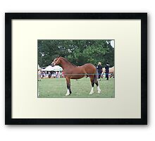 Proud Stallion .. I am going to win this Framed Print