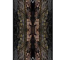 Mossy wood bark pattern Photographic Print