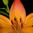 Tiger Lily Detail by Bonnie T.  Barry