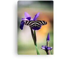 Zebra Longwing on Iris  Canvas Print