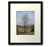 Wild Cherry Tree in Spring Bloom Framed Print