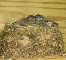 5 Hatchlings by Sarahjevo