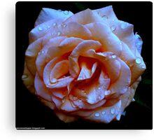 Dark Blue Peach Rose Canvas Print