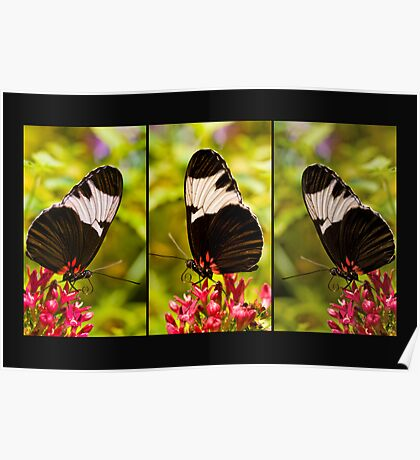 Butterfly Panel Poster