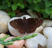 Butterfly  by kelleybear