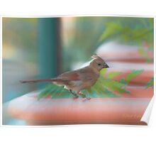 Baby Cardinal Poster