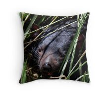 photoj 'Tassie Devil- 'Hide & Seek' Throw Pillow