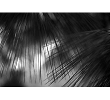 Pine needles Photographic Print
