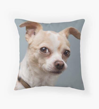 Curious Chihuahua Throw Pillow