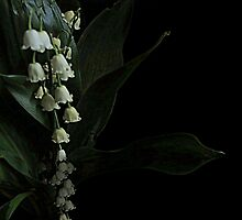 Lily Of The Valley by trueblvr