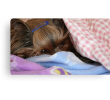 Stuggled In For A Nap Canvas Print