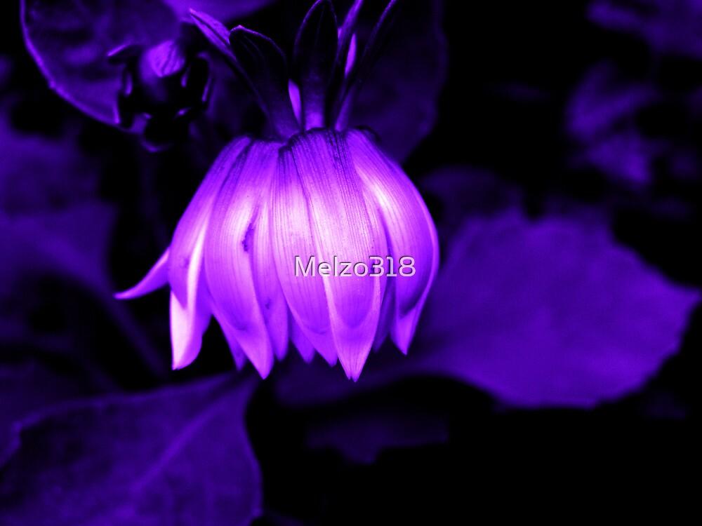 Midnight Dahlia by Melzo318