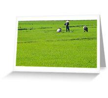 Rice Fields #1 (Hoi An, Viet Nam) Greeting Card