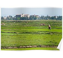 Rice Fields #2 Poster