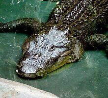 Alligator  by AuXillary