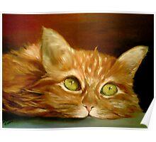 Athos my cat Poster