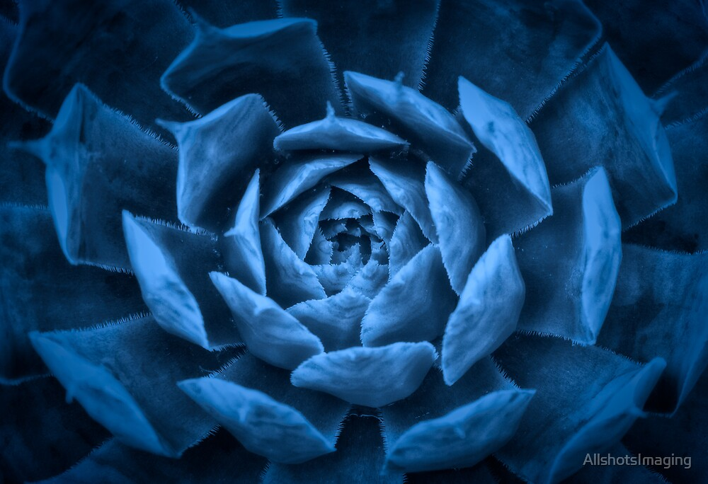 Abstract Succulent by AllshotsImaging