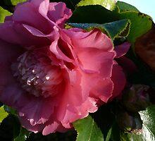Camellia 3 by beeden