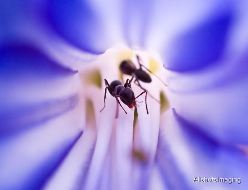 Ants in a flower by AllshotsImaging