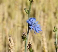 Blue by James Wheeler
