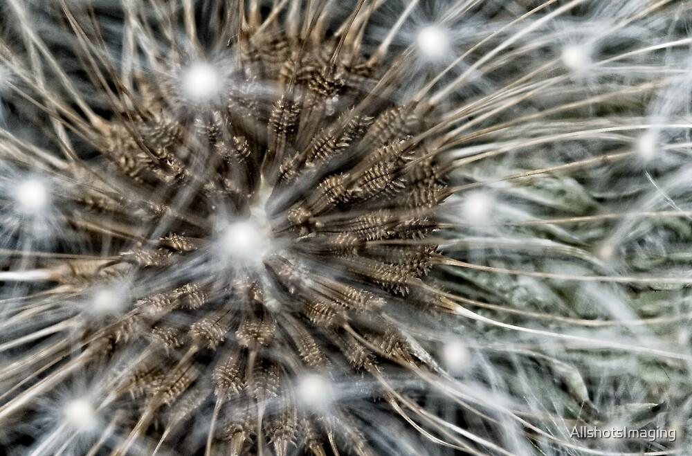 Electric Dandelion by AllshotsImaging