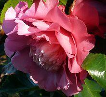 Camellia 4 by beeden