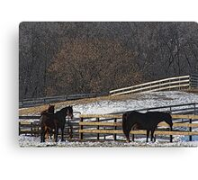 Horses in Snowy Pasture Canvas Print