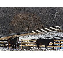 Horses in Snowy Pasture Photographic Print