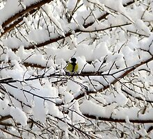 A Twee Bit of Colour For Your Winter by Dennis Melling