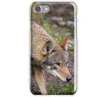 Red Wolf Hunts Unseen Prey iPhone Case/Skin