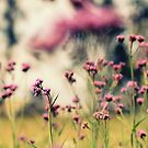 Magic of Pink by Beata  Czyzowska Young