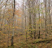 iran autumn,reza goudarzi,رضا گودرزی by reza goudarzi