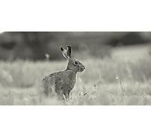 Black & White Sitting Hare Photographic Print