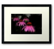 Glowing in the Evening Light... Framed Print