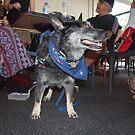 Bundy - Tex & Bundy Charity Fundraisers by Joe Hupp