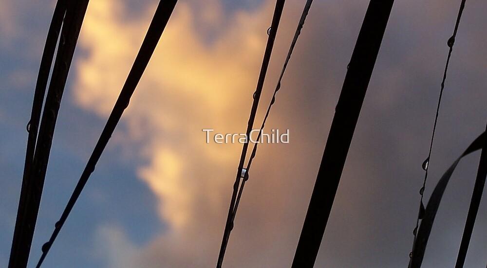Rain drops by TerraChild